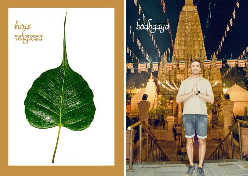 Blatt vom Ficus Religiosa und Tempel